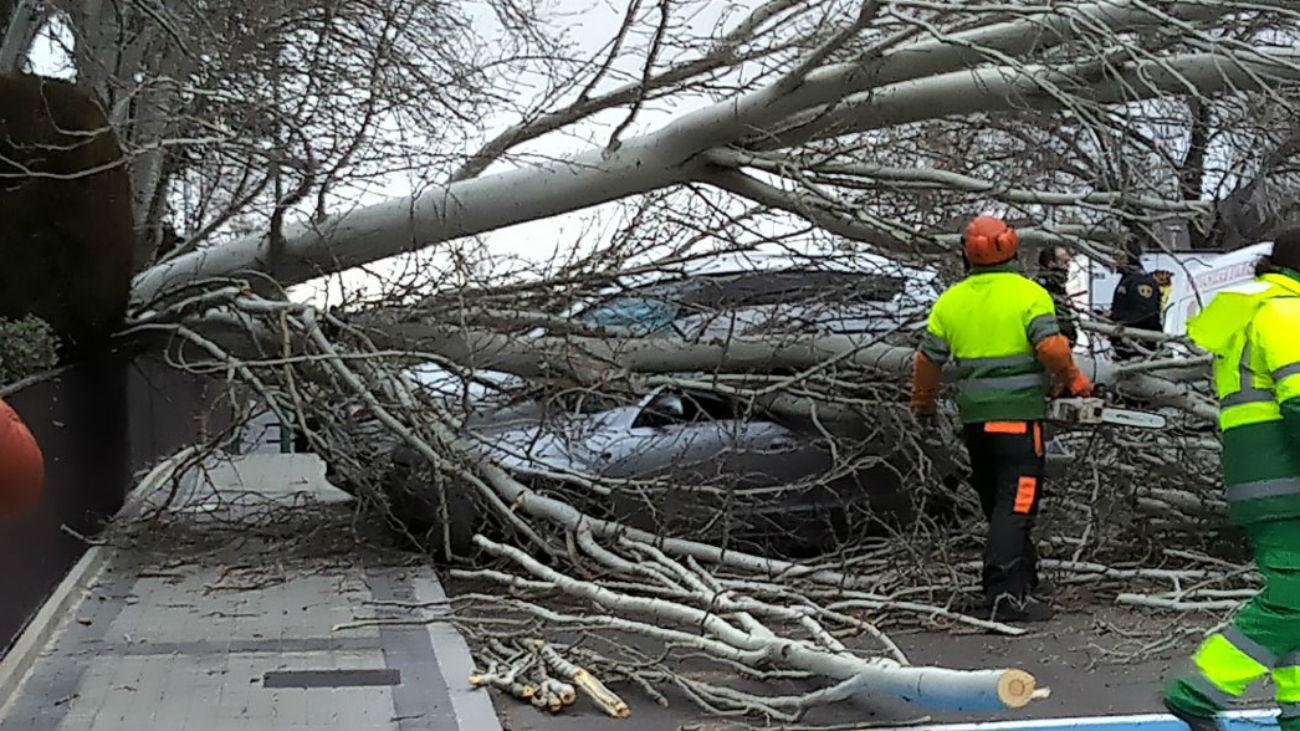 Caída de un árbol en Las Rozas (Foto: @_JMMS_)