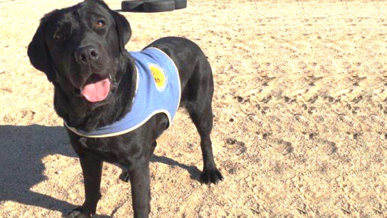 Las redes sociales se vuelcan para encontrar a la perra robada en Aranjuez