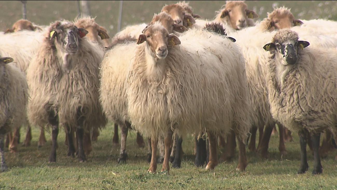 El IMIDRA trabaja para salvar tres especies autóctonas de la Comunidad de Madrid