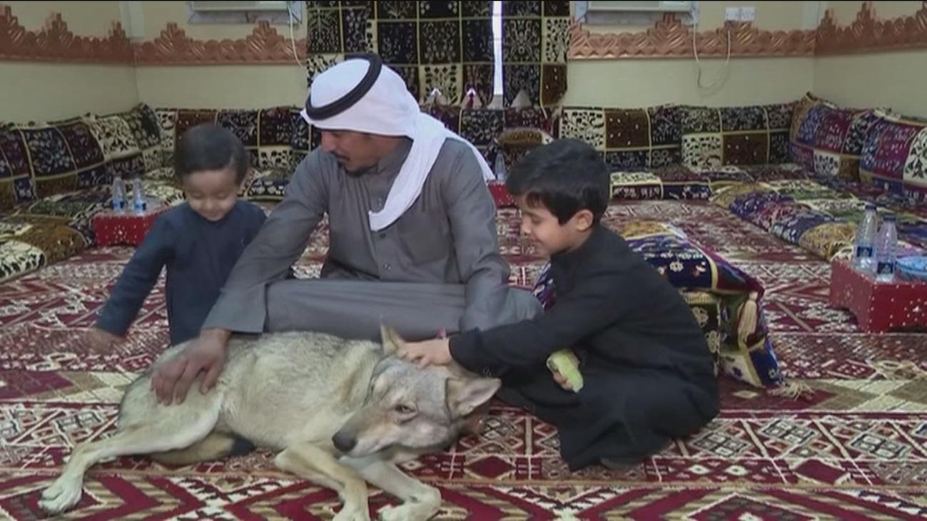 La familia saudí que vive rodeada de lobos