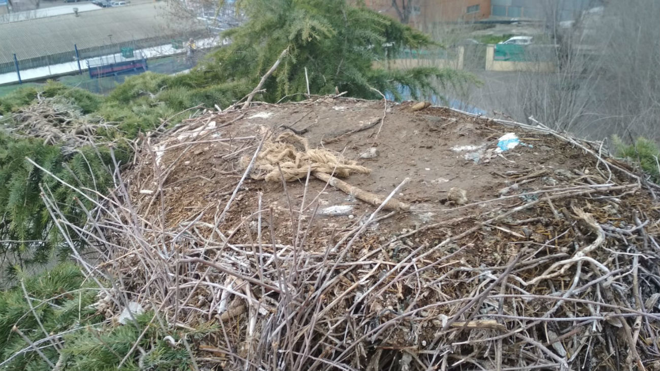 Velilla retira un nido de cigüeñas y otro de cotorras argentinas por riesgo de caída