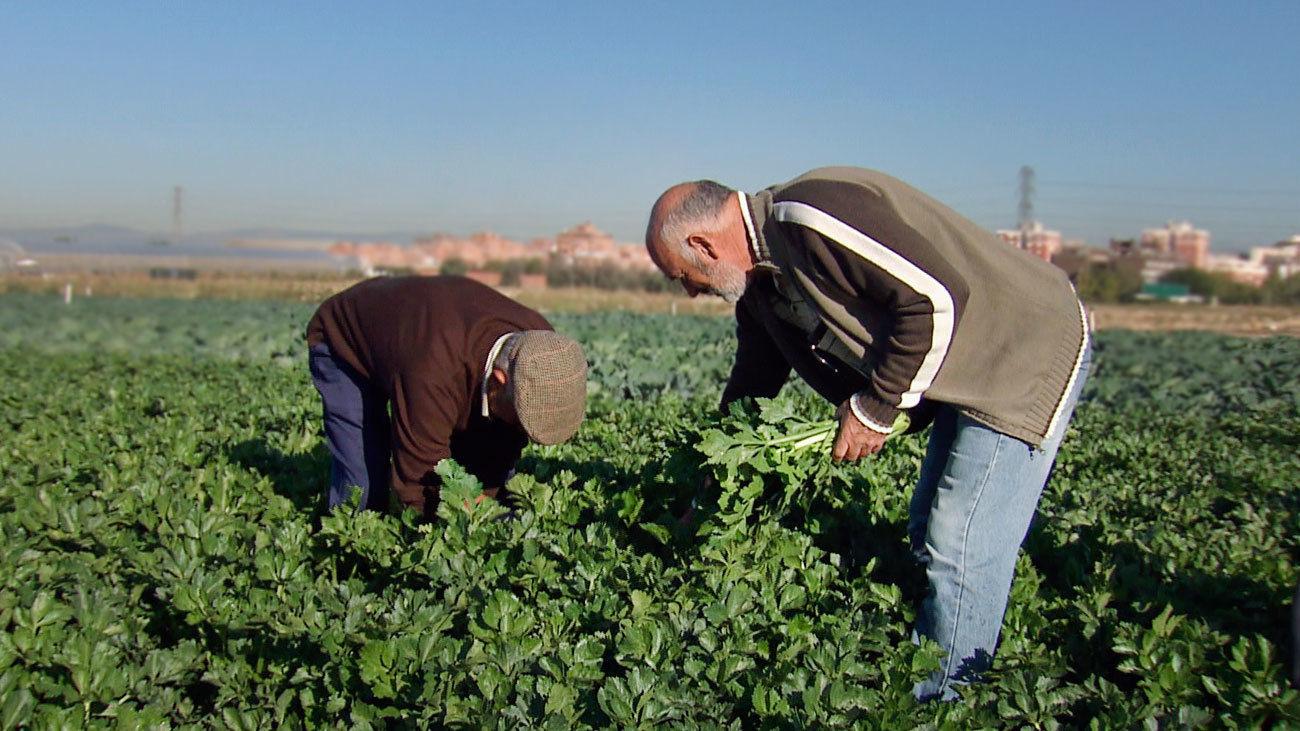 Agricultores de Madrid