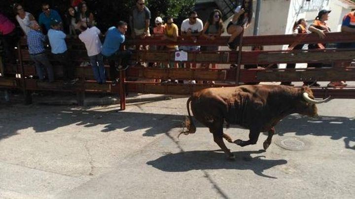Galapagar preguntará a los vecinos si quieren acabar con las subvenciones a los toros