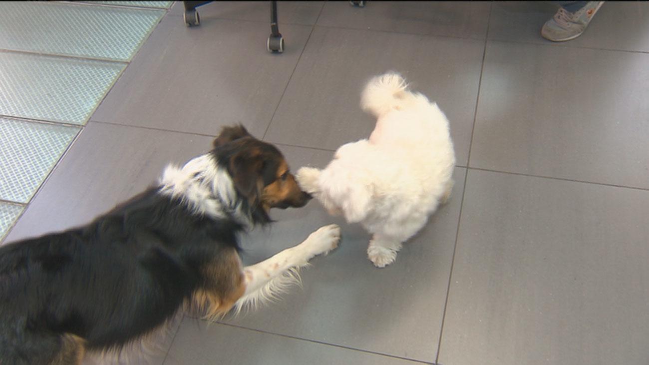 En esta empresa de publicidad permiten que los perros estén en la oficina con sus dueños