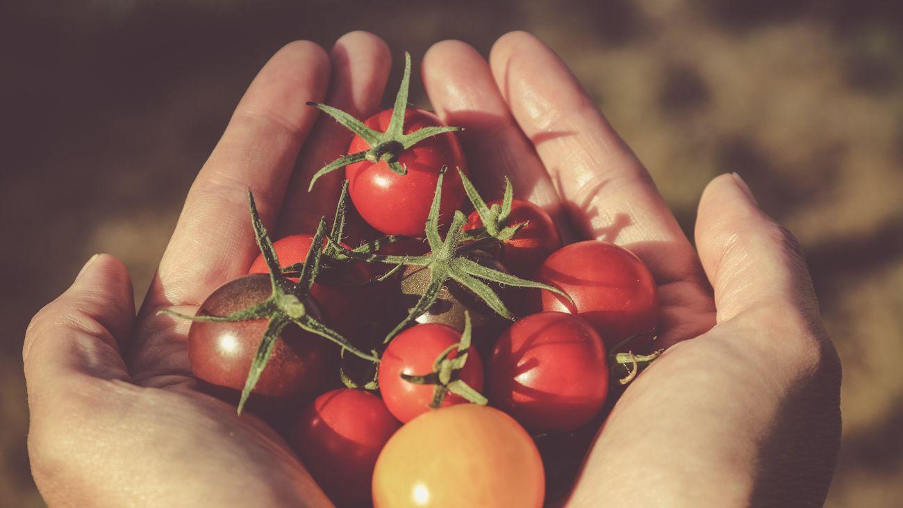 ¿Cómo comercializar productos agrícolas eliminando intermediarios?