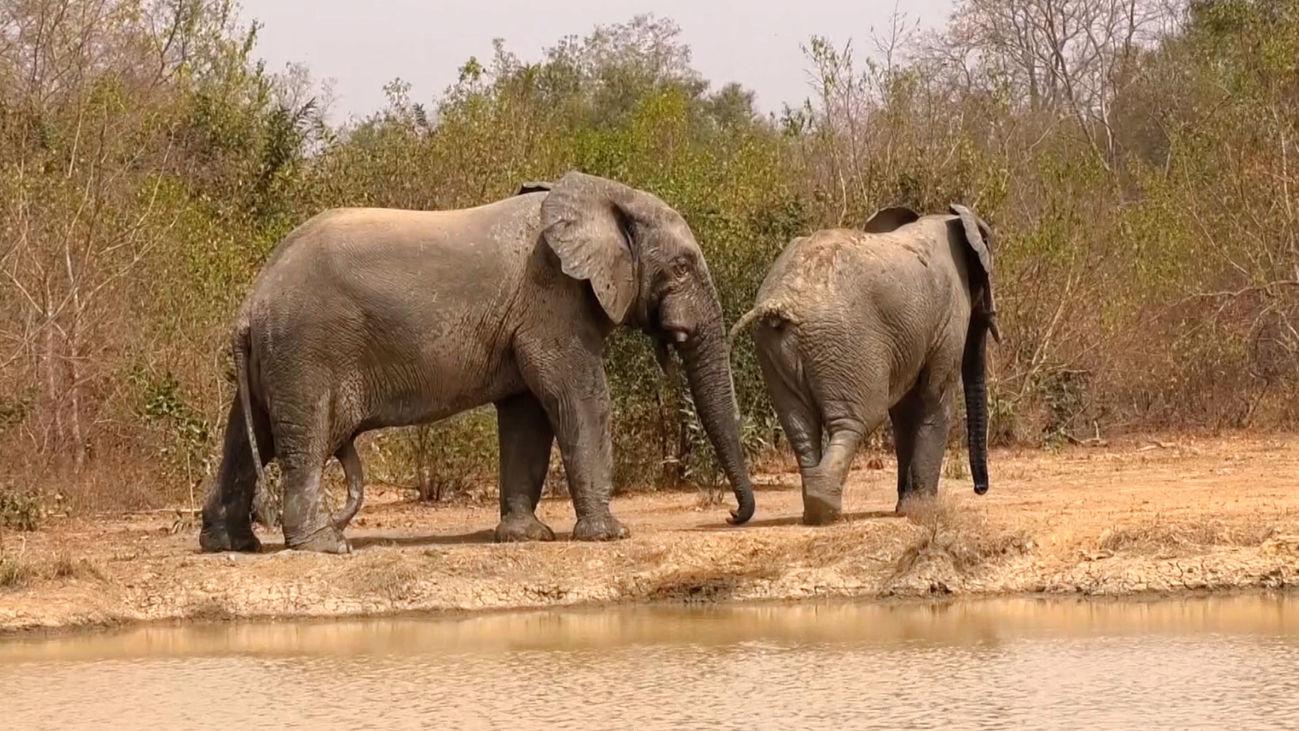Safari a pie en el Parque Nacional de Mole