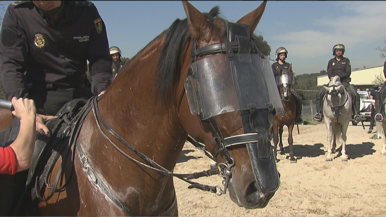 Así entrenan a los caballos de la Policía Nacional ante situaciones de riesgo