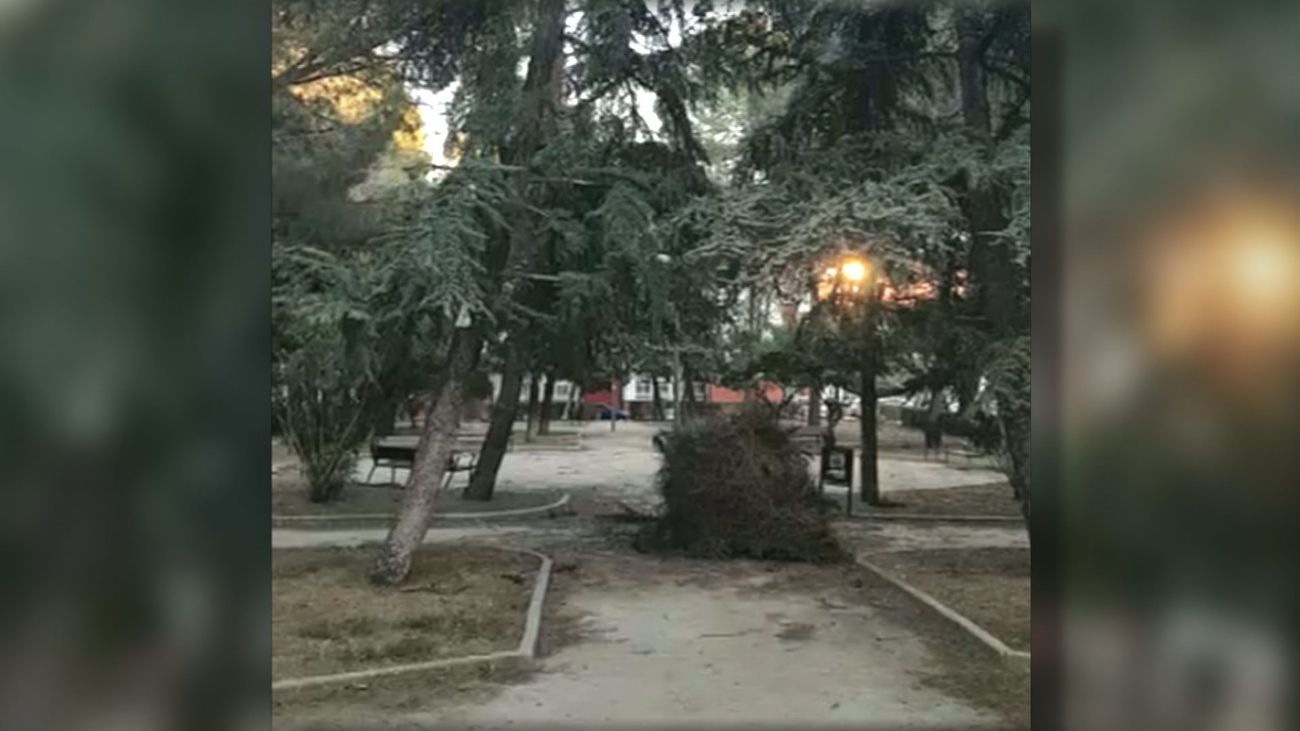 Nido gigante de cotorras caído en un parque de San Blas
