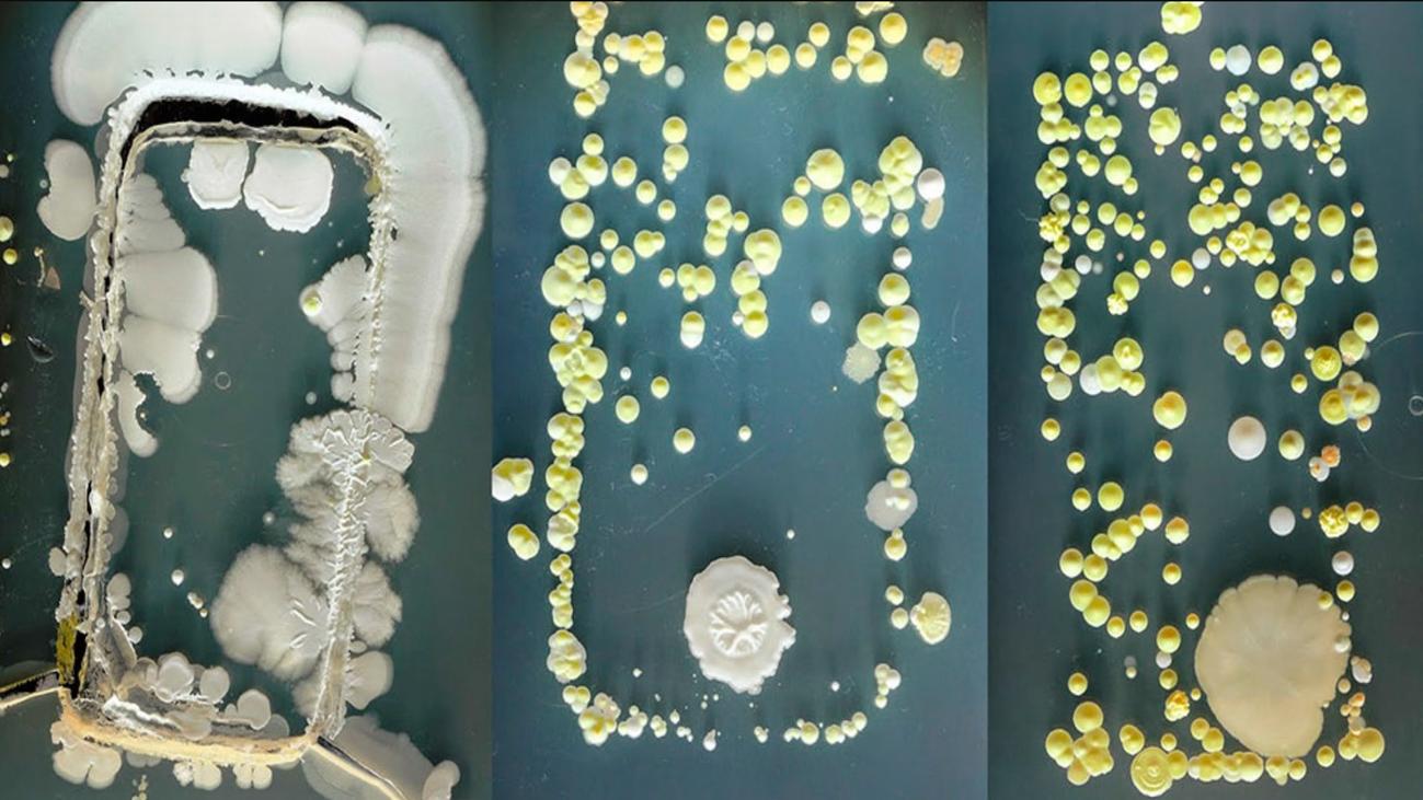 Los móviles acumulan más bacterias que los inodoros