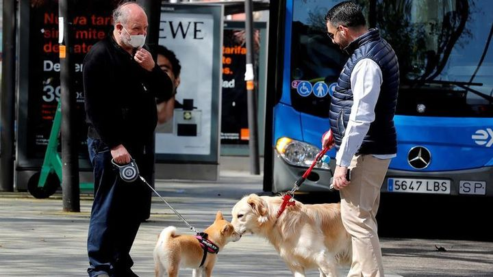 Las personas podrían transmitir el Covid-19 a perros, gatos y hurones
