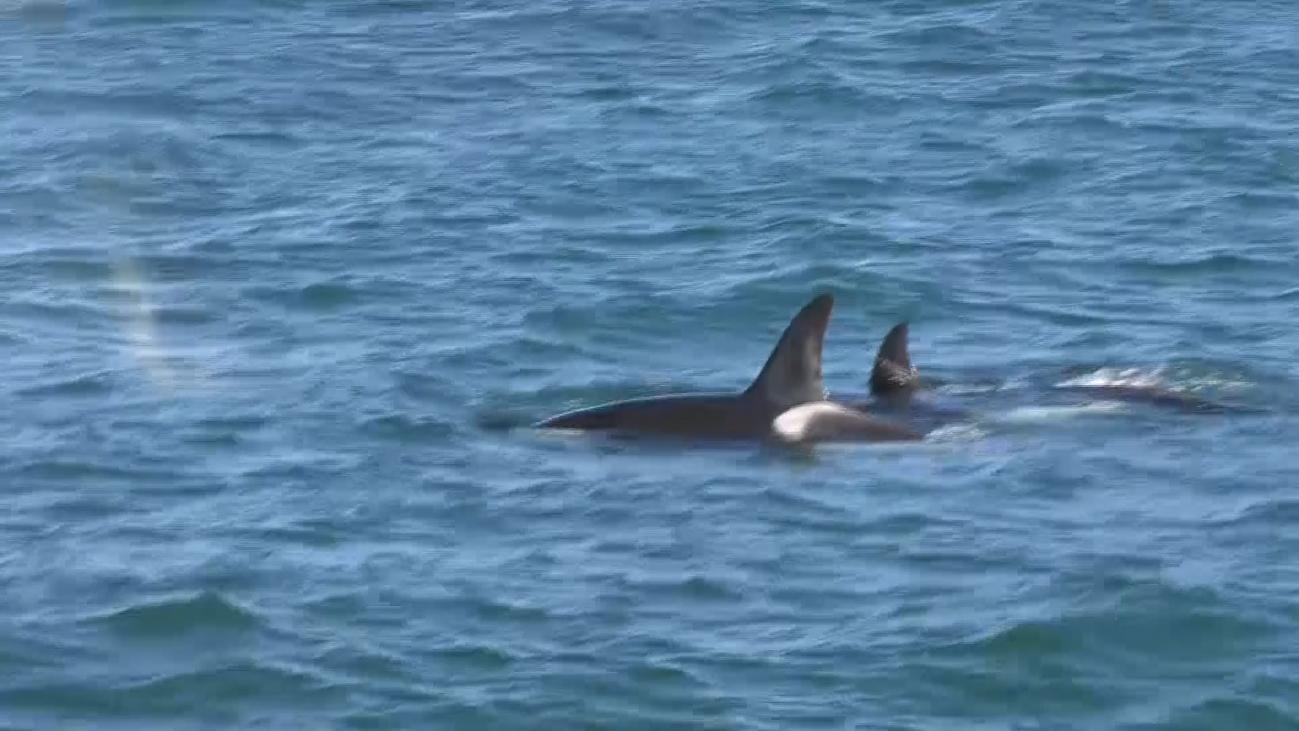 Nueva Zelanda, el paraíso de las ballenas