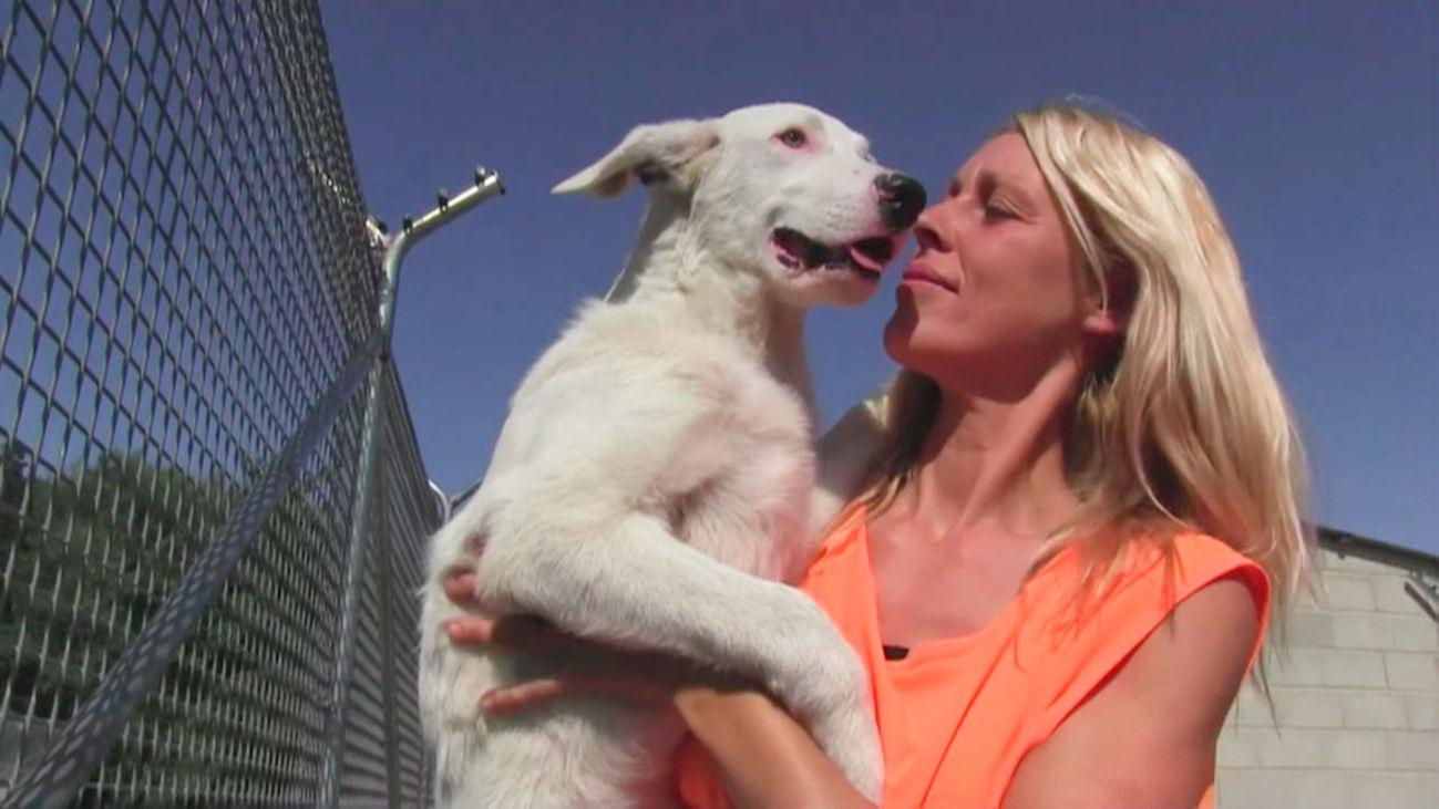 Las adopciones de mascotas están paralizadas y las protectoras se preparan para lo peor