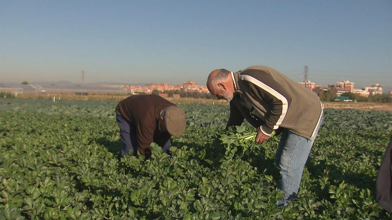 La Comunidad pone en marcha un plan de choque para agricultores y ganaderos