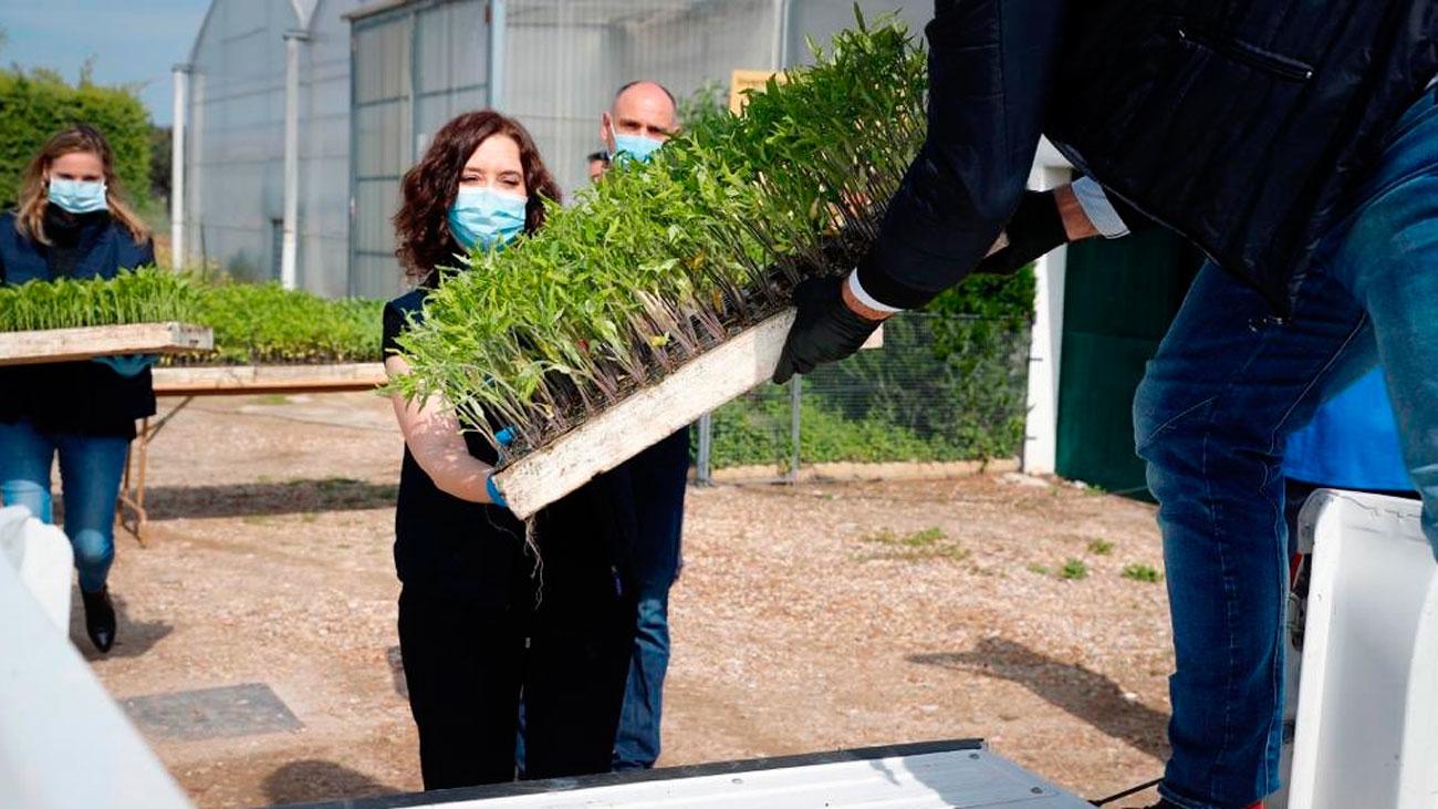 La Comunidad de Madrid dona 450.000 plantones a agricultores madrileños