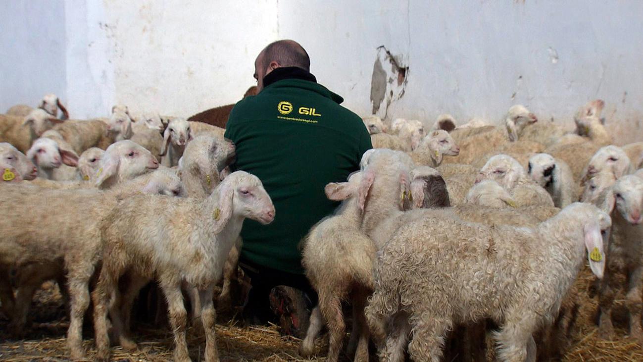 Los ganaderos de Torremocha del Jarama también sufren la crisis del coronavirus