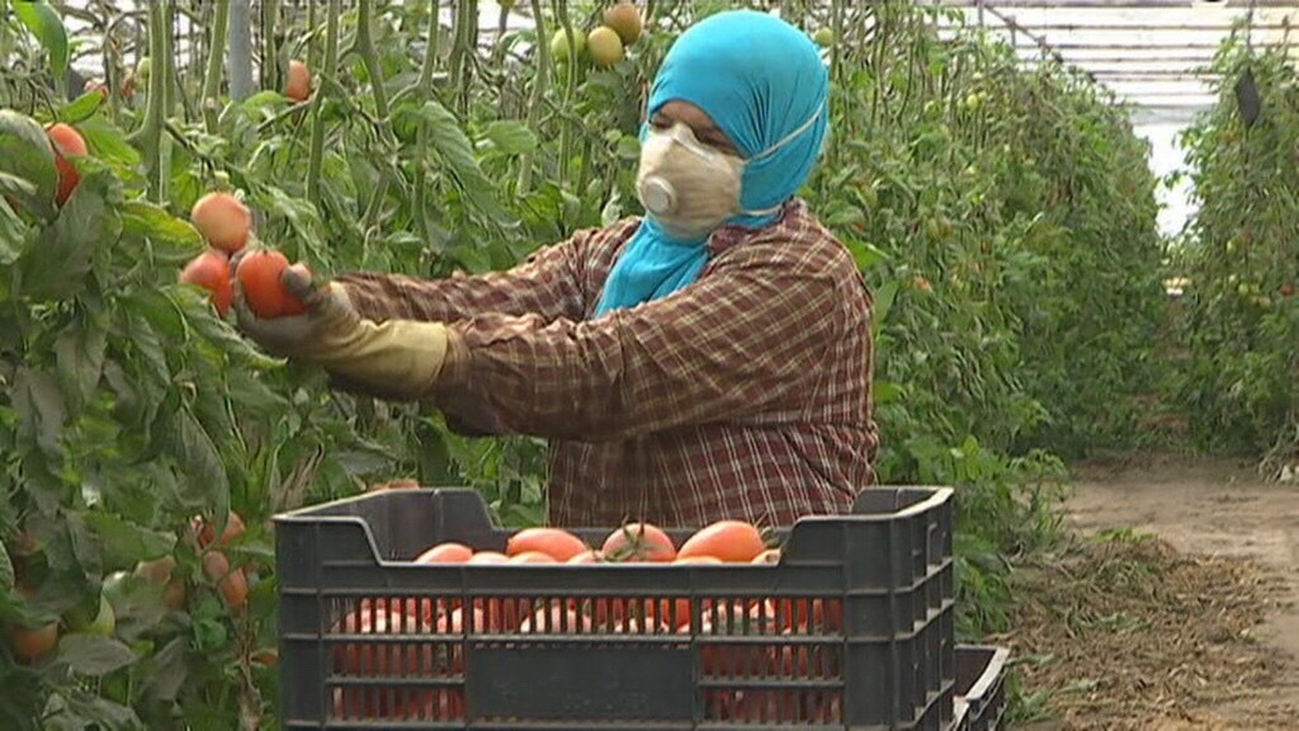 Se necesitan 90.000 temporeros para recoger las cosechas
