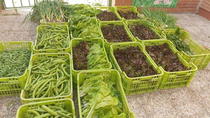 Fuenlabrada recoge 200 kilos de verduras y hortalizas de huertos escolares para familias vulnerables