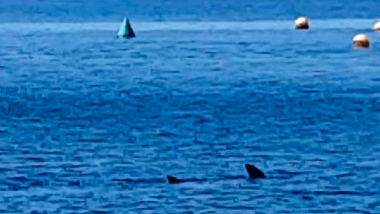 Los tiburones aparecen en las costas españolas ante la ausencia de barcos y bañistas por la cuarentena