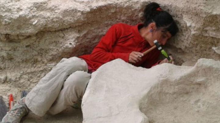 Tesoros paleontológicos de Madrid