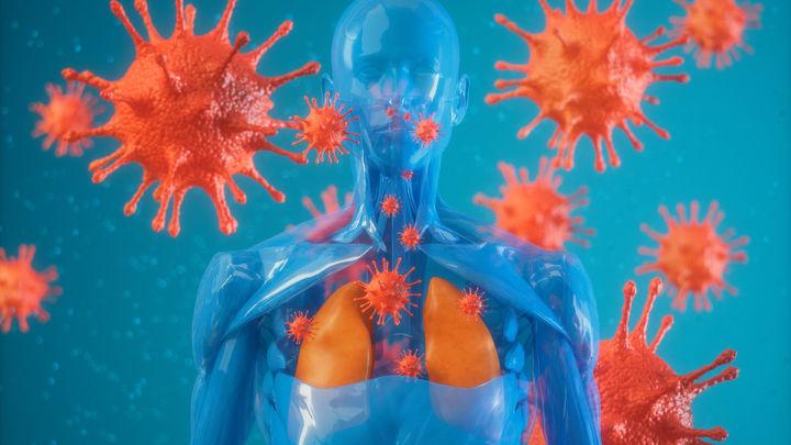 El virus actúa sobre el sistema respiratorio