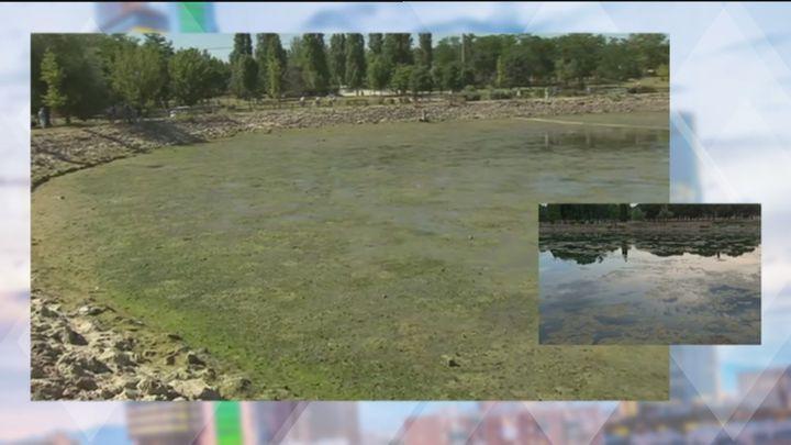 Madrid vacía y limpia tres de sus lagos ante la proliferación de algas