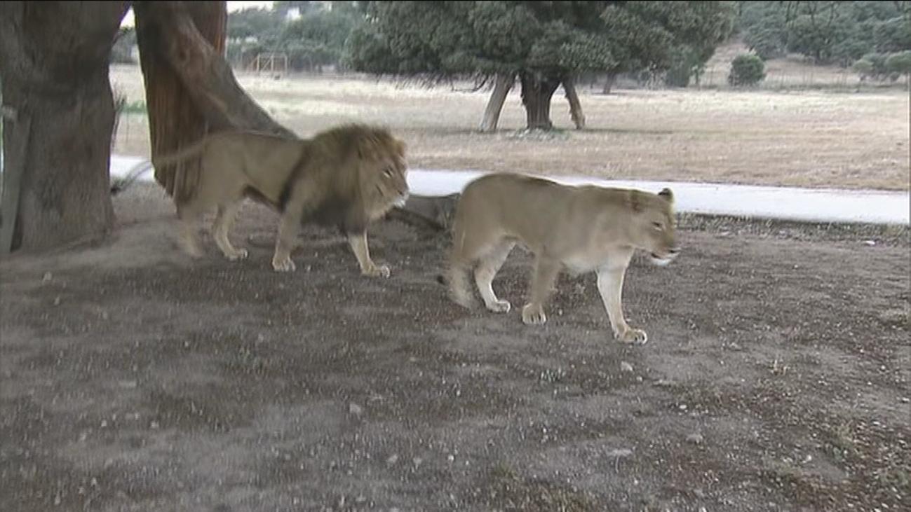 El Safari de Madrid pide que les dejen abrir en fase 2