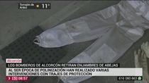 Así retiran un enjambre de abejas los bomberos de Alcorcón
