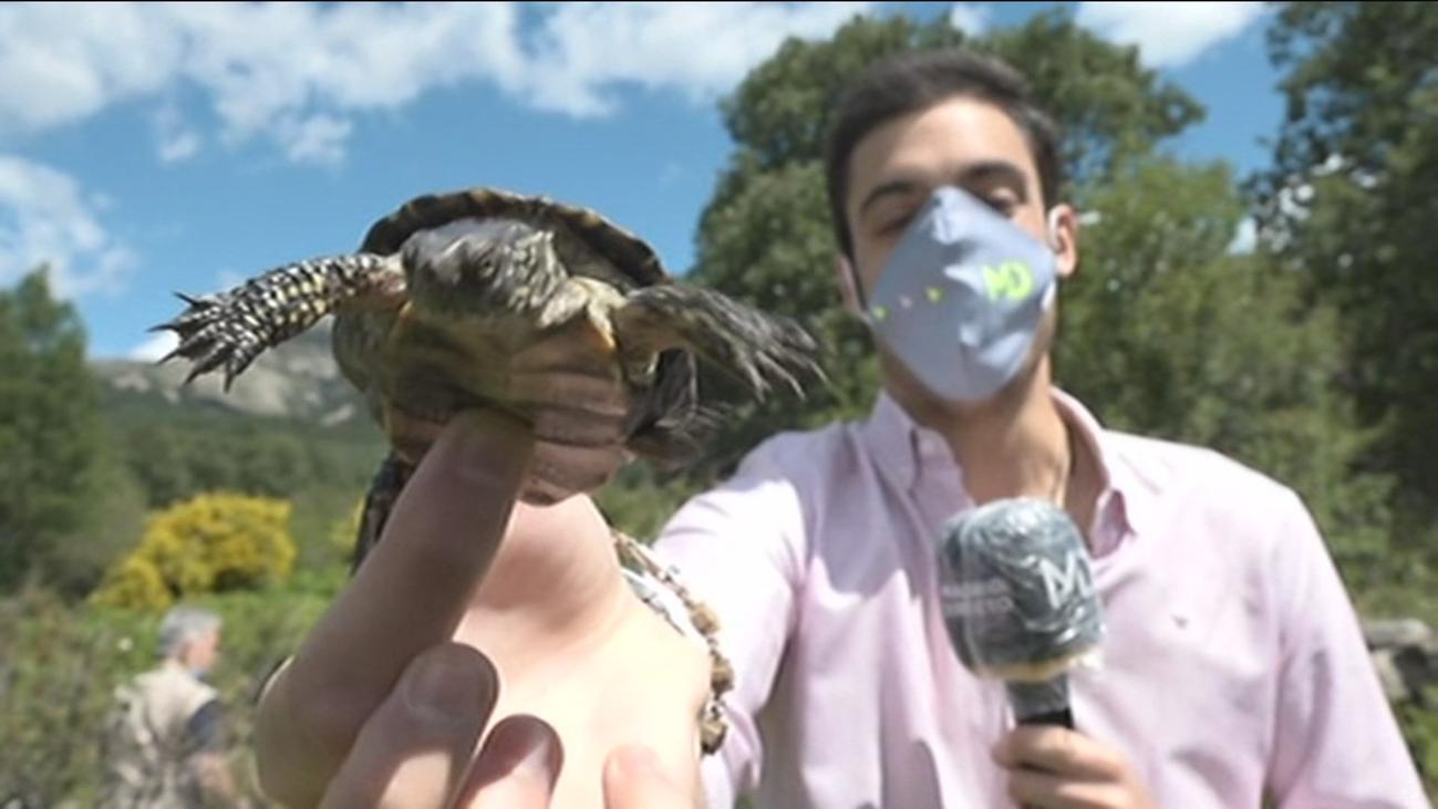 Suelta de galápagos en Soto del Real