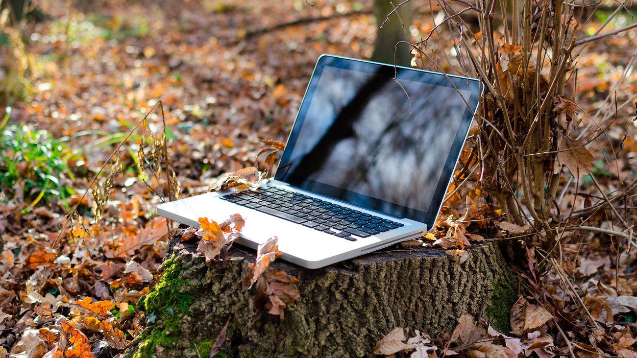 Un ordenador portátil en el tronco de un árbol