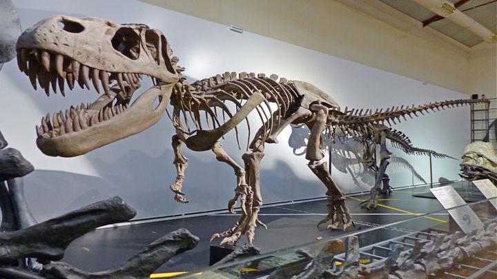 Las joyas del Museo de Ciencia Naturales de Madrid