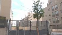 Sin acceso a sus propias casas por 'culpa' de unos árboles, en El Cañaveral