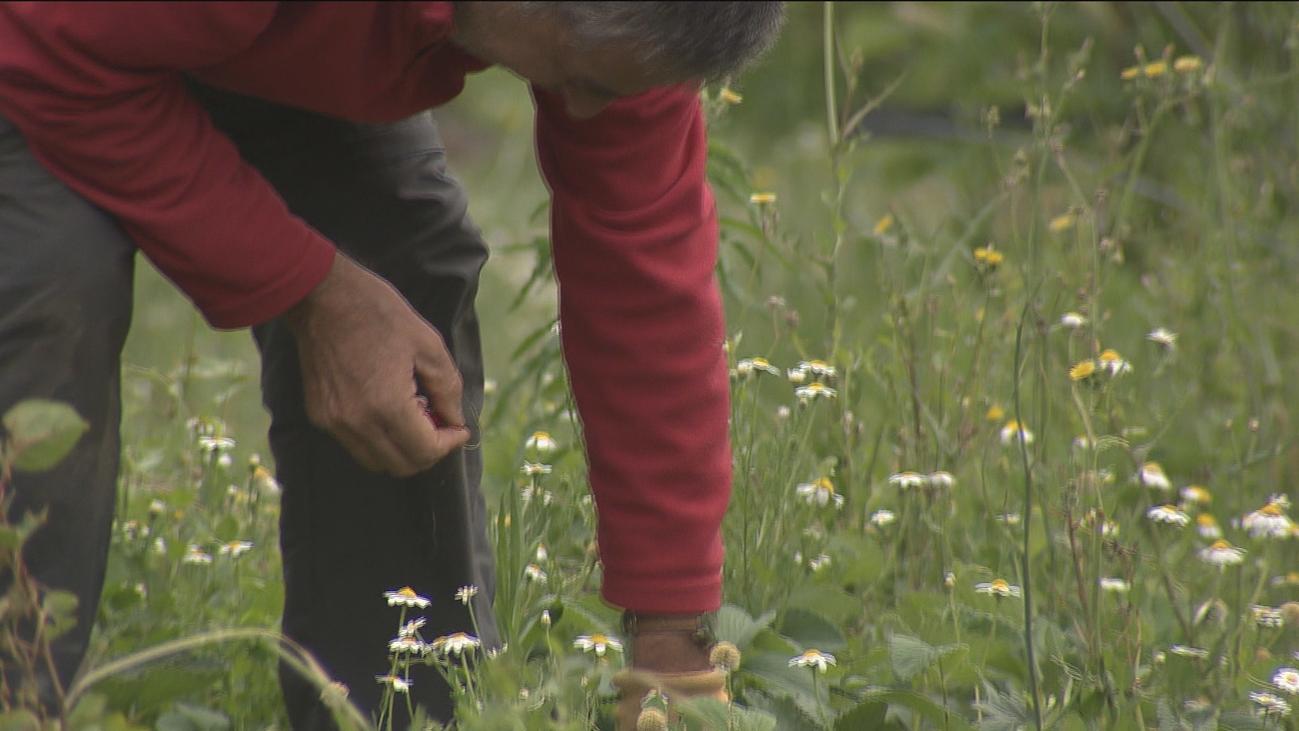 Más de 150 madrileños se forman azada en mano en la agricultura ecológica