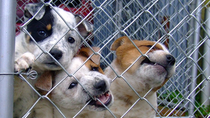Aumenta el abandono de perros con la desescalada del coronavirus