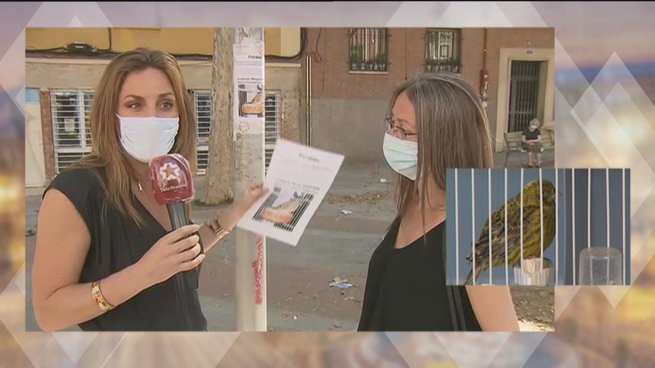 Recompensa de 3.000 euros para quien encuentre un jilguero perdido en el barrio de Tetuán