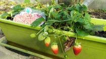 Cómo plantar un huerto urbano en tu balcón