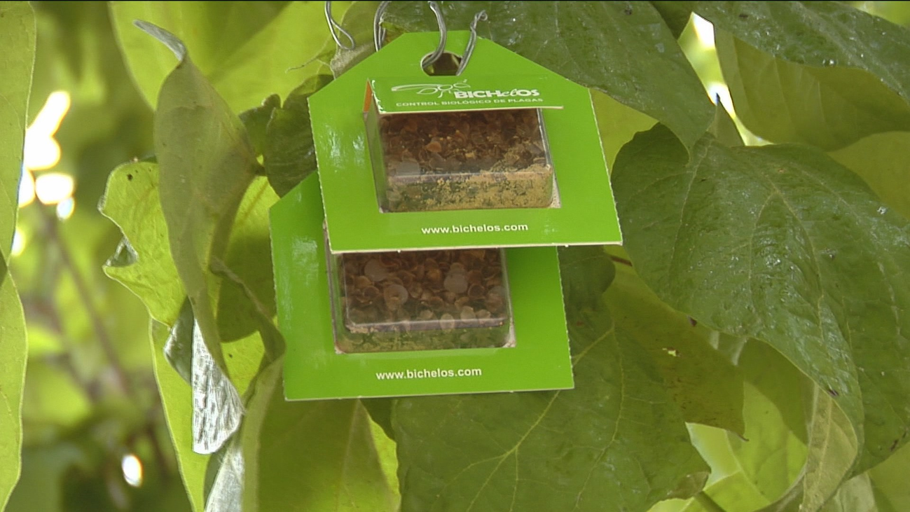 Leganés lucha contra las plagas de insectos con otros insectos