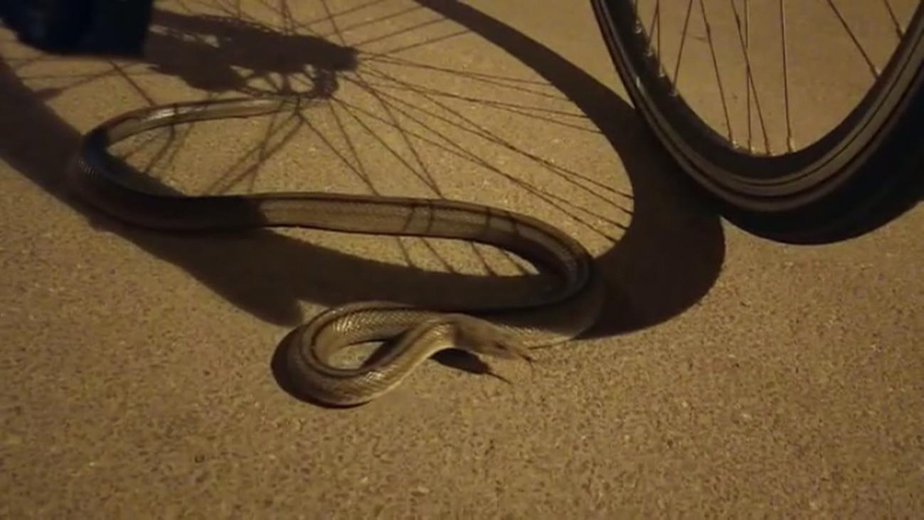 Serpientes escalera en un túnel del anillo ciclista de Las Tablas