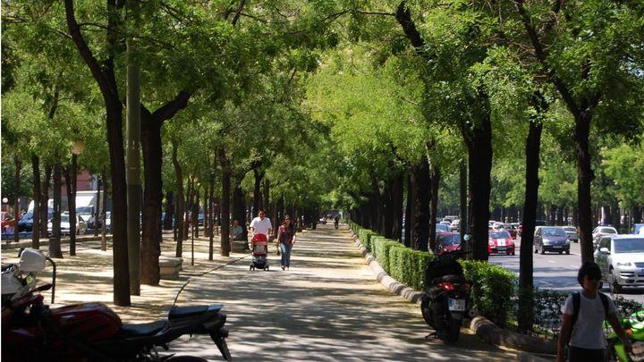 Los beneficios de los árboles urbanos