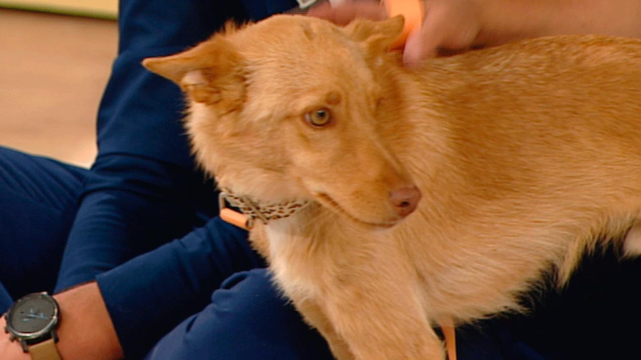 """¿Pueden las mascotas transmitir el coronavirus a los humanos? """"Los dueños  pueden estar tranquilos"""""""