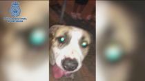 Detenido en el distrito de Tetuán por maltratar a su perro