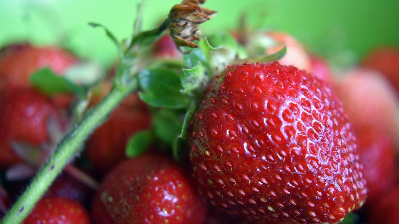 Recolectar fresas en Madrid, ¿dónde?