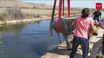 Rescatan un caballo de una acequia en San Martín de Valdeiglesias