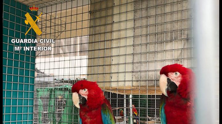 Desmantelada una red dedicada al comercio ilegal de animales protegidos