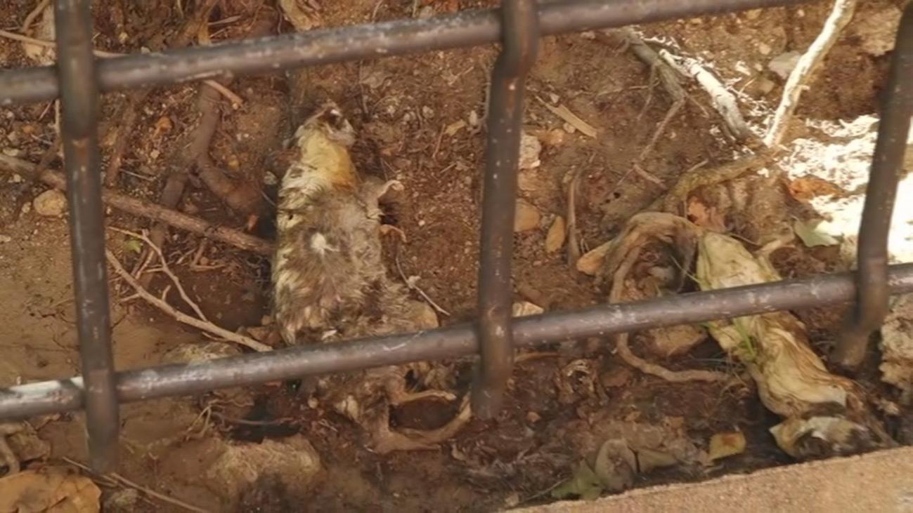 Denuncian la invasión de ratas en Alcorcón