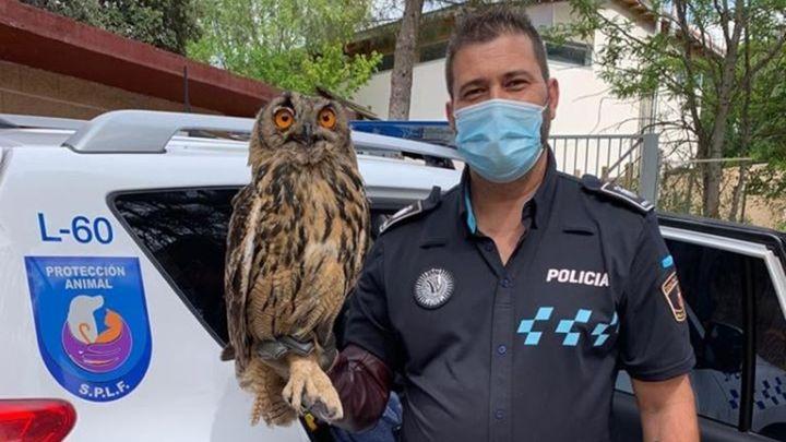 La Policía de Fuenlabrada rescata un búho real que se había atragantado