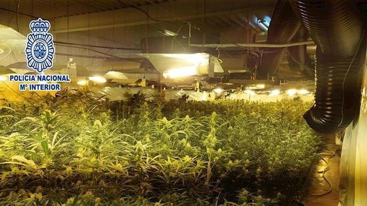 La Policía Nacional incauta más de 12.000 plantas de marihuana en Madrid, Serranillos y Aranjuez