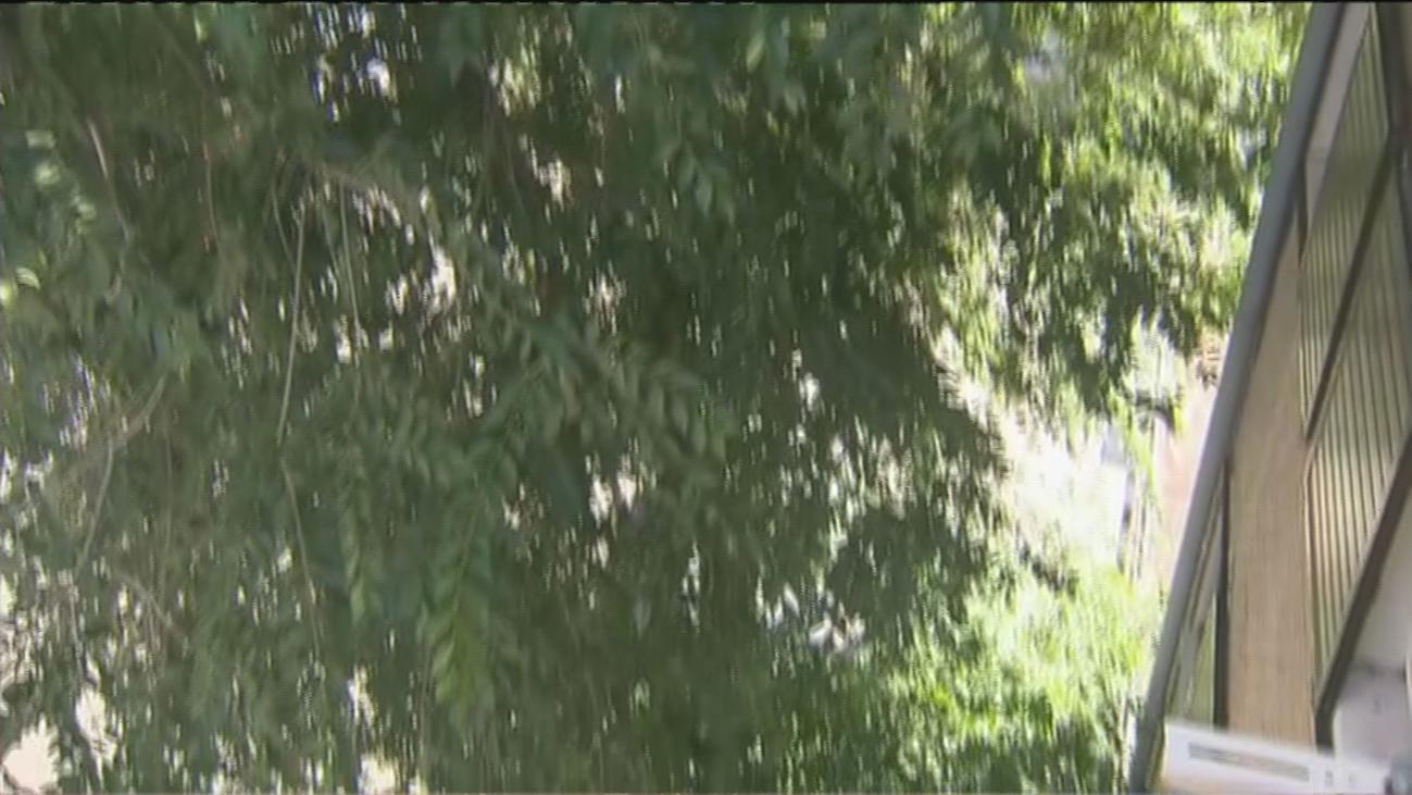 Un árbol gigante se mete por la ventana, tira tejas y destroza el canalón de un bloque en la Avenida de Burgos