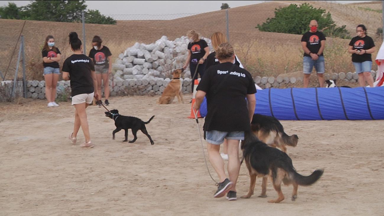 Clases de obediencia canina al aire libre en Arroyomolinos