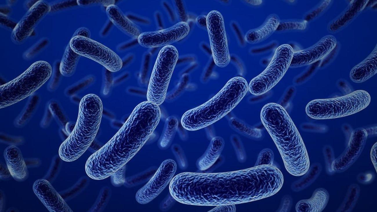 Una superbacteria que ayuda al sistema inmune