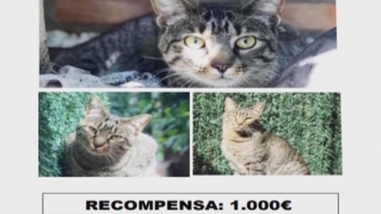 Recompensa de 1.000 euros a quien encuentre a Lucky, un gato perdido en Guadarrama